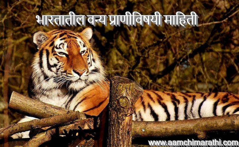 bhartatil-vanya-prani-chi-mahiti